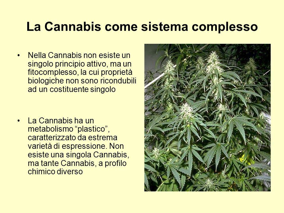 La Cannabis come sistema complesso