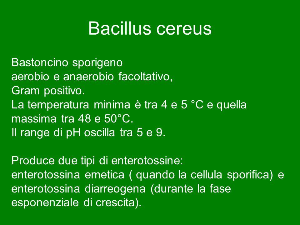 Bacillus cereus Bastoncino sporigeno aerobio e anaerobio facoltativo,