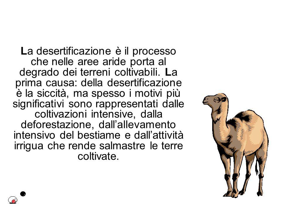 La desertificazione è il processo che nelle aree aride porta al degrado dei terreni coltivabili.