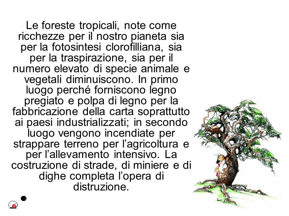 Le foreste tropicali, note come ricchezze per il nostro pianeta sia per la fotosintesi clorofilliana, sia per la traspirazione, sia per il numero elevato di specie animale e vegetali diminuiscono.