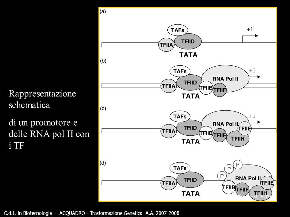 Rappresentazione schematica