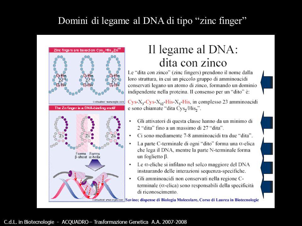 Domini di legame al DNA di tipo zinc finger