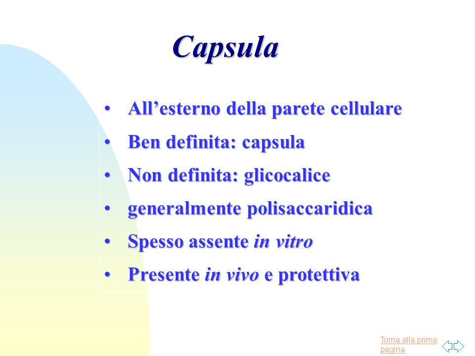 Capsula All'esterno della parete cellulare Ben definita: capsula