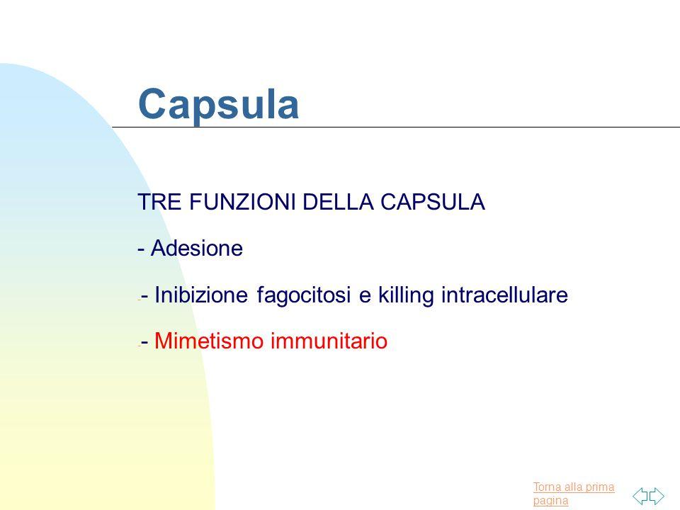 Capsula TRE FUNZIONI DELLA CAPSULA - Adesione