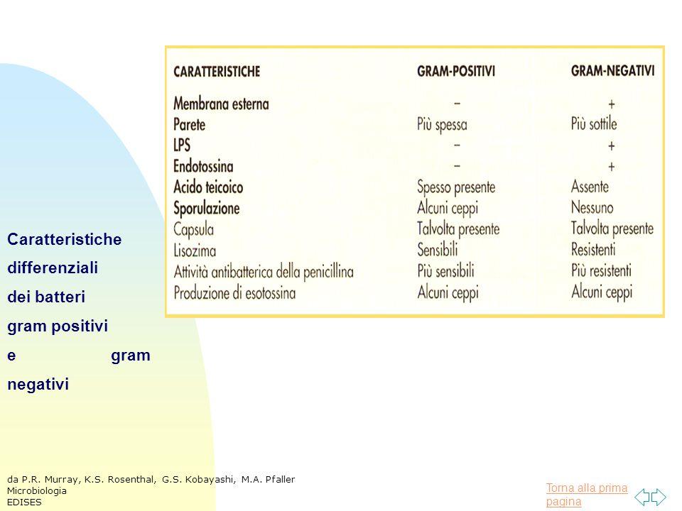 Caratteristiche differenziali dei batteri gram positivi e gram negativi