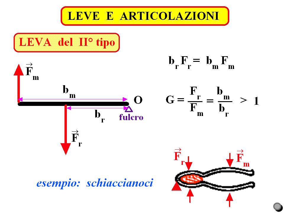 LEVE E ARTICOLAZIONI LEVA del II° tipo. piede in sollevamento. Fr = forza peso corpo = = 80 kgp  800 N.