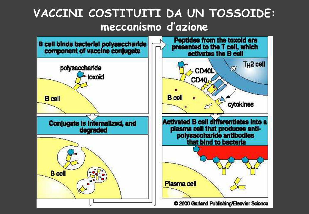 VACCINI COSTITUITI DA UN TOSSOIDE: meccanismo d'azione