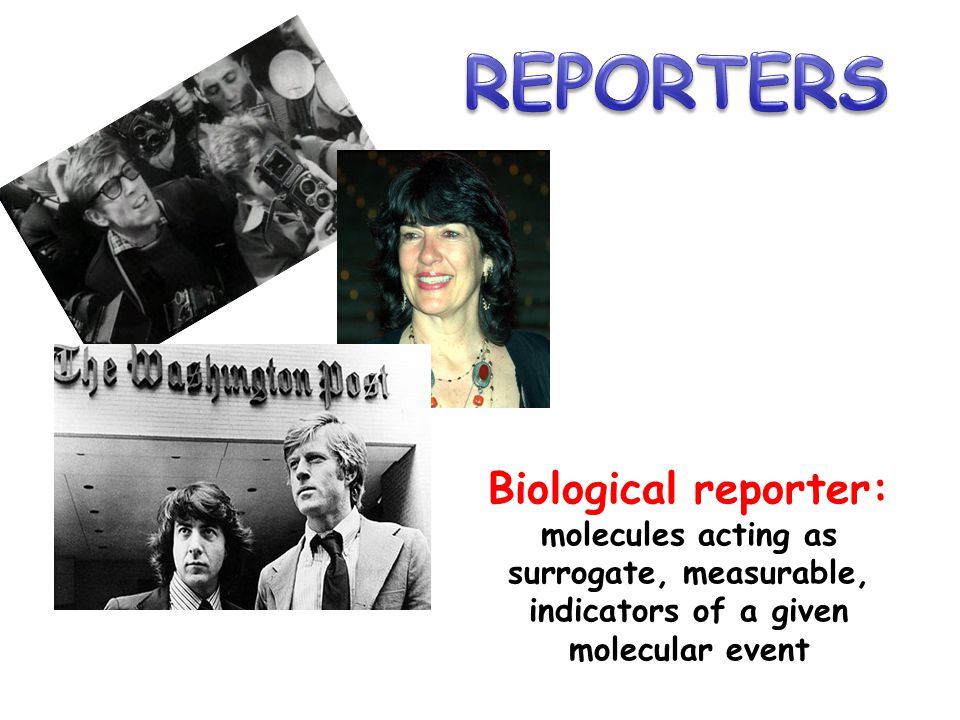 REPORTERS Biological reporter: molecules acting as surrogate, measurable, indicators of a given molecular event.