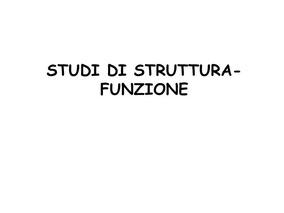 STUDI DI STRUTTURA-FUNZIONE