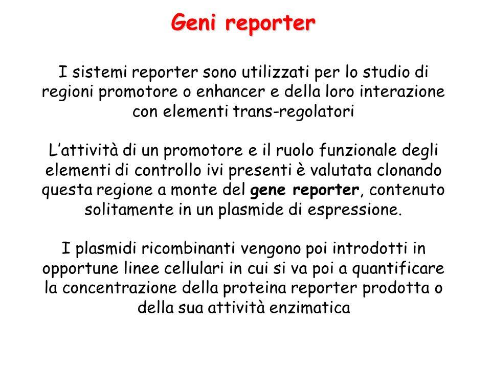 Geni reporter I sistemi reporter sono utilizzati per lo studio di regioni promotore o enhancer e della loro interazione con elementi trans-regolatori.