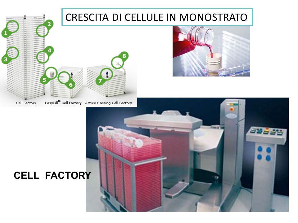 CRESCITA DI CELLULE IN MONOSTRATO