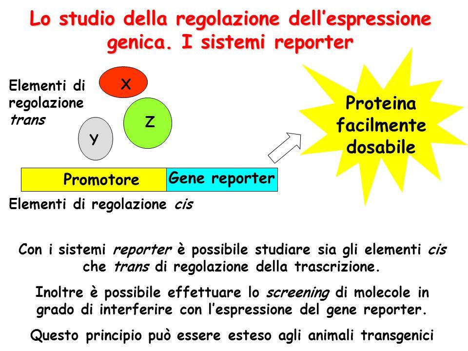 Lo studio della regolazione dell'espressione genica. I sistemi reporter