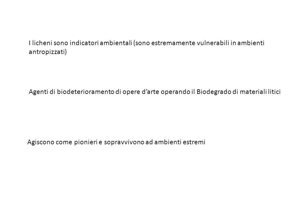 I licheni sono indicatori ambientali (sono estremamente vulnerabili in ambienti