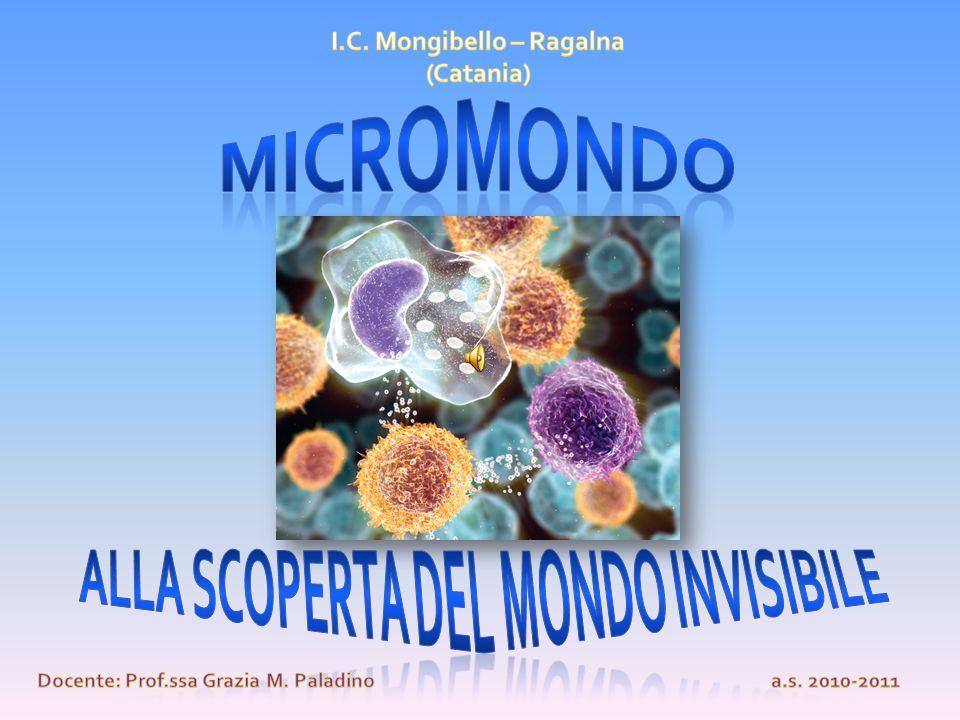 MICROMONDO Alla scoperta del mondo invisibile