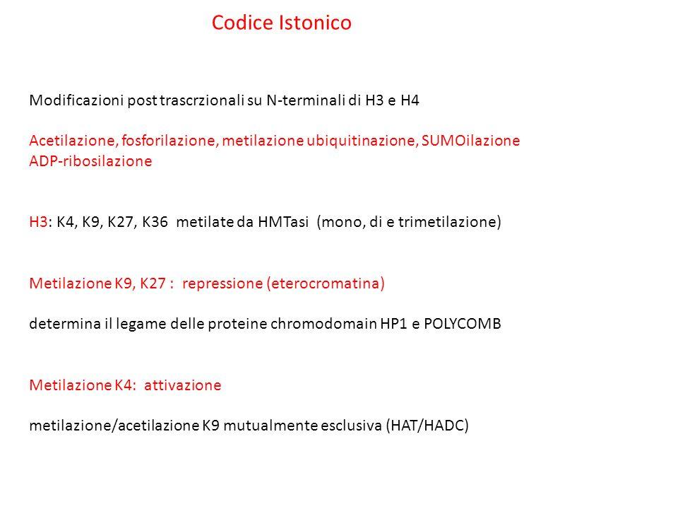 Codice Istonico Modificazioni post trascrzionali su N-terminali di H3 e H4. Acetilazione, fosforilazione, metilazione ubiquitinazione, SUMOilazione.