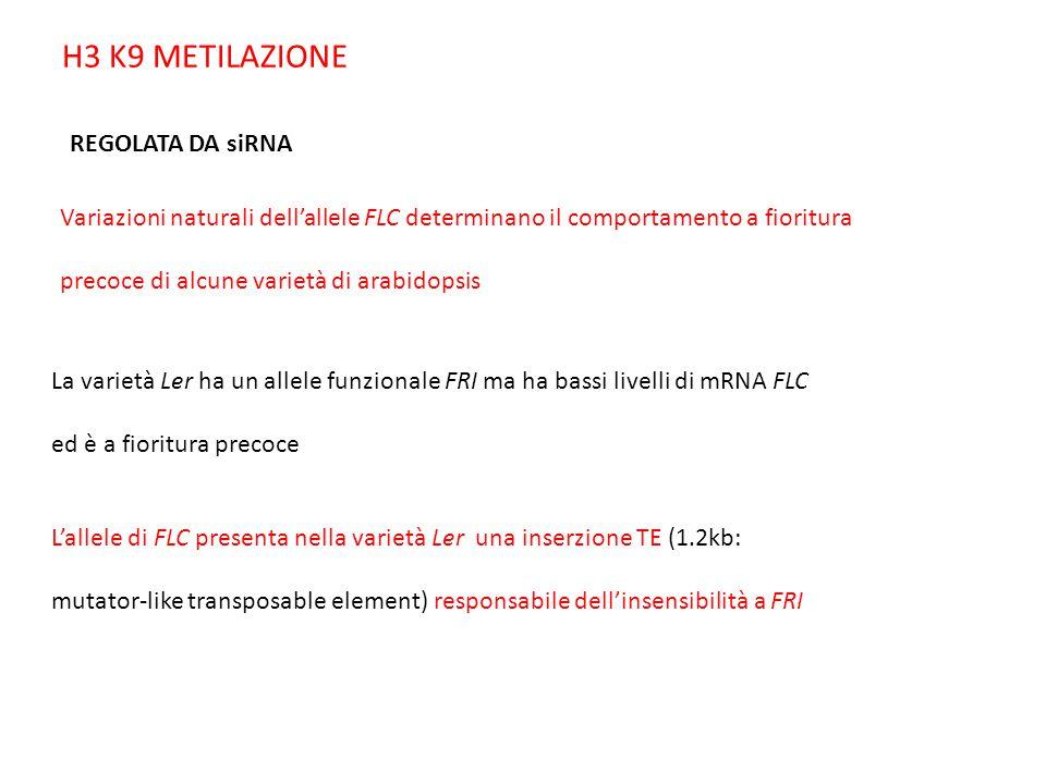 H3 K9 METILAZIONE REGOLATA DA siRNA