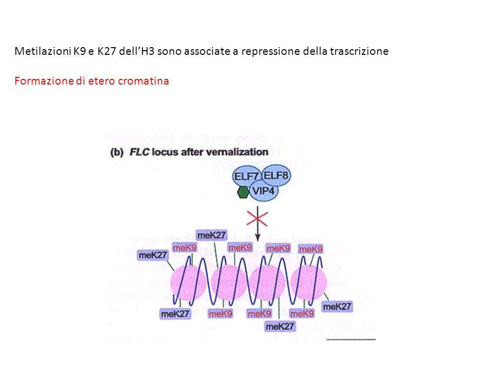Metilazioni K9 e K27 dell'H3 sono associate a repressione della trascrizione