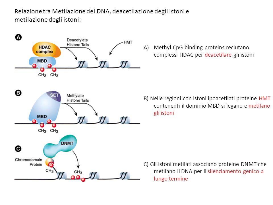 Relazione tra Metilazione del DNA, deacetilazione degli istoni e metilazione degli istoni: