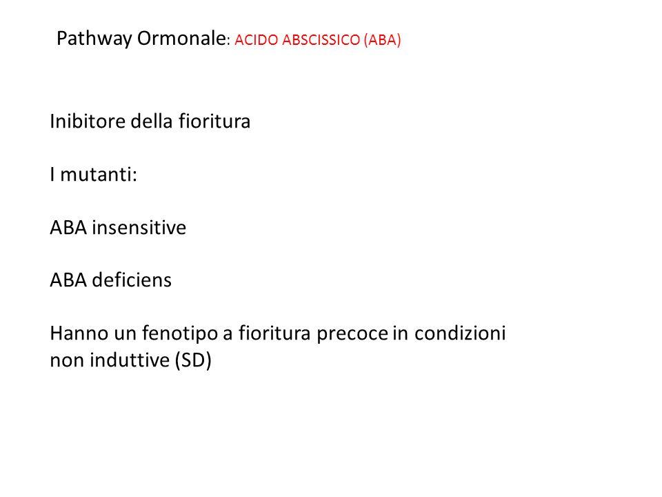 Pathway Ormonale: ACIDO ABSCISSICO (ABA)