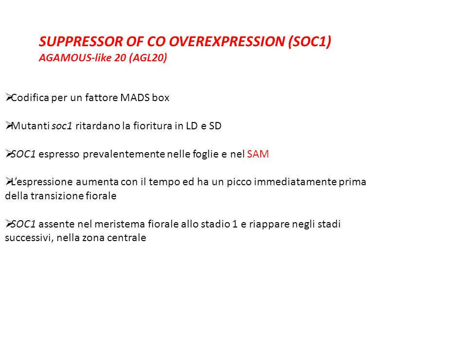 SUPPRESSOR OF CO OVEREXPRESSION (SOC1)