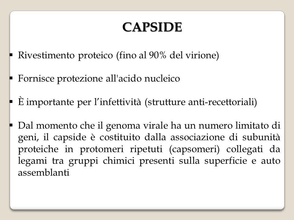 CAPSIDE Rivestimento proteico (fino al 90% del virione)