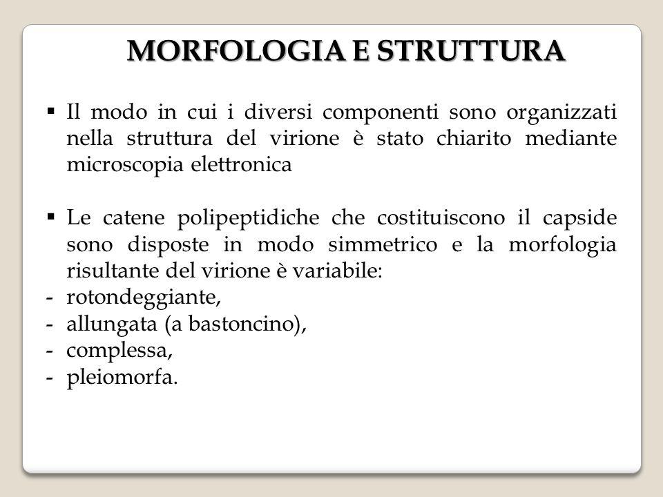 MORFOLOGIA E STRUTTURA