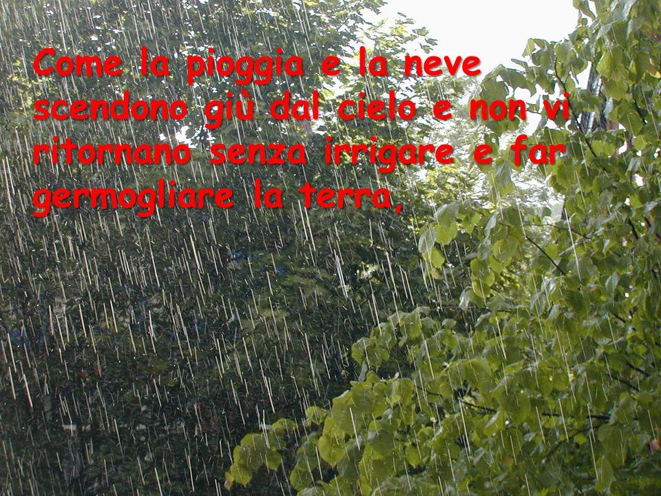 Come la pioggia e la neve scendono giù dal cielo e non vi ritornano senza irrigare e far germogliare la terra,