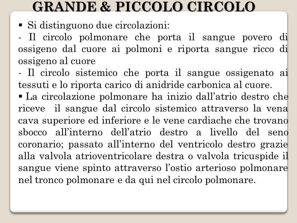 GRANDE & PICCOLO CIRCOLO