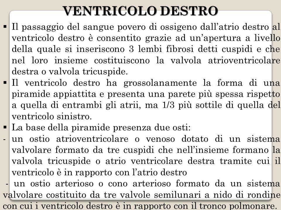 VENTRICOLO DESTRO