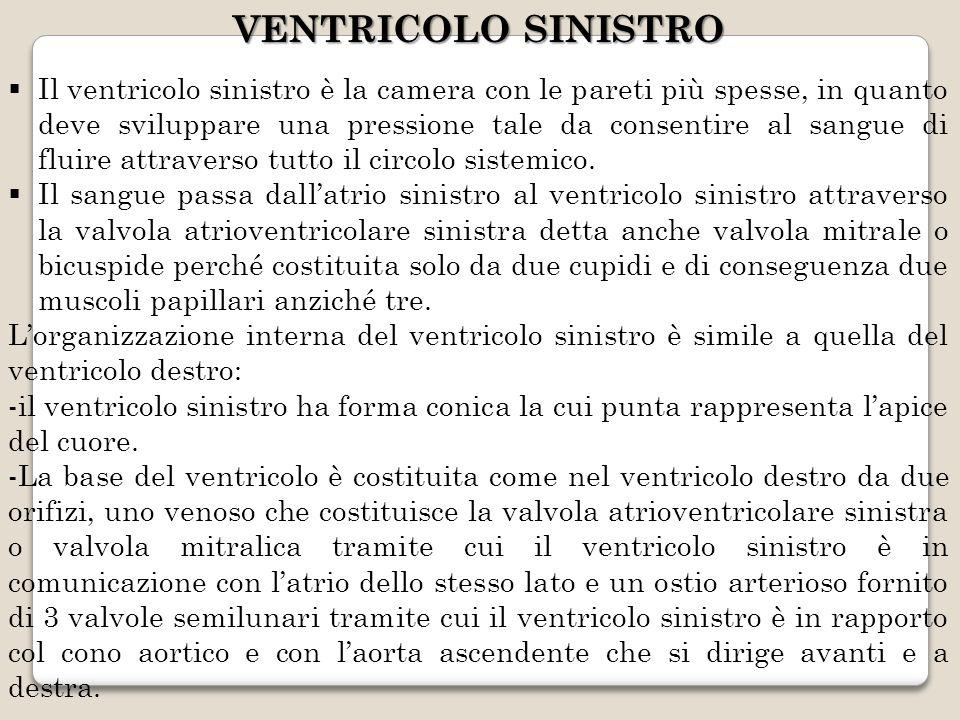 VENTRICOLO SINISTRO