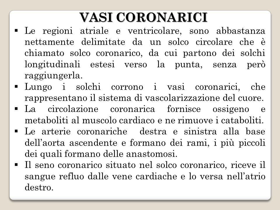 VASI CORONARICI