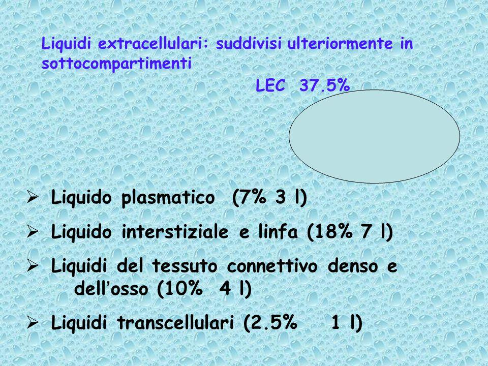 Liquidi extracellulari: suddivisi ulteriormente in sottocompartimenti
