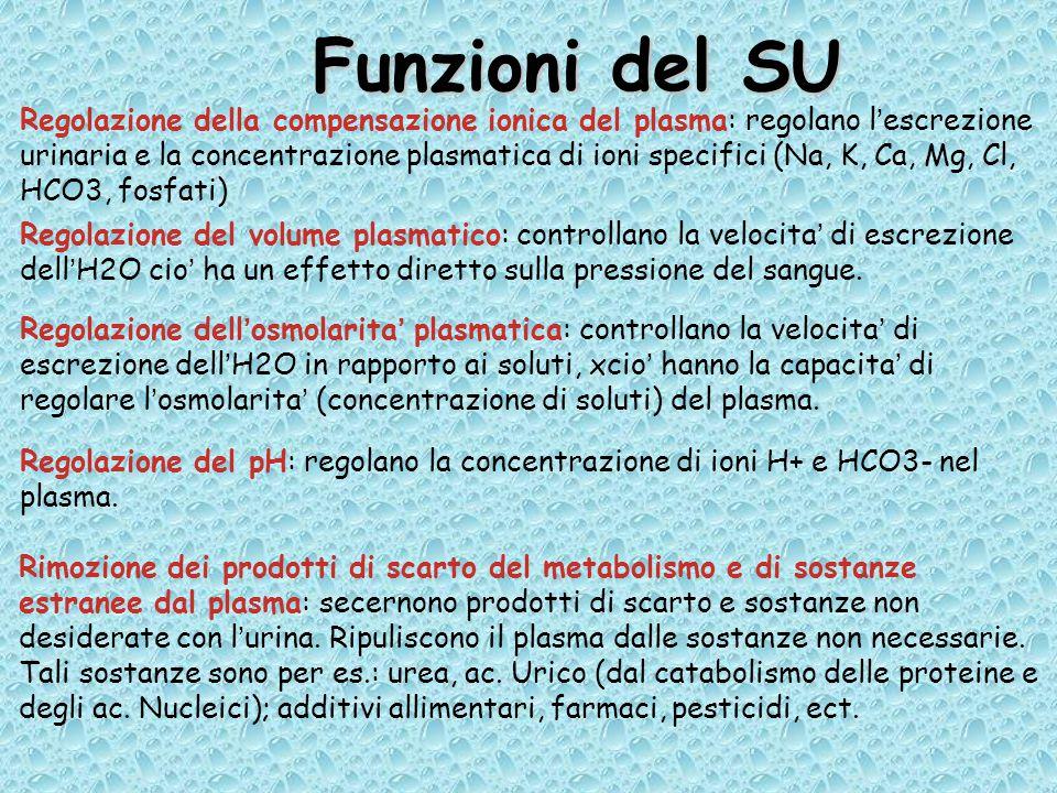 Funzioni del SU