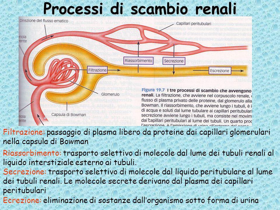 Processi di scambio renali