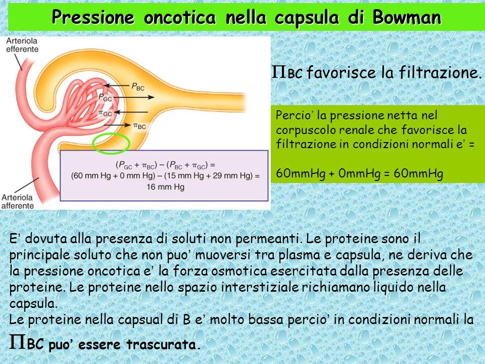 Pressione oncotica nella capsula di Bowman