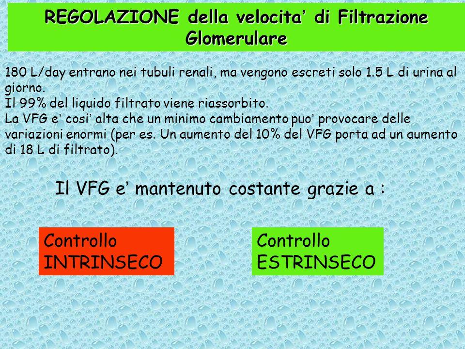 REGOLAZIONE della velocita' di Filtrazione Glomerulare