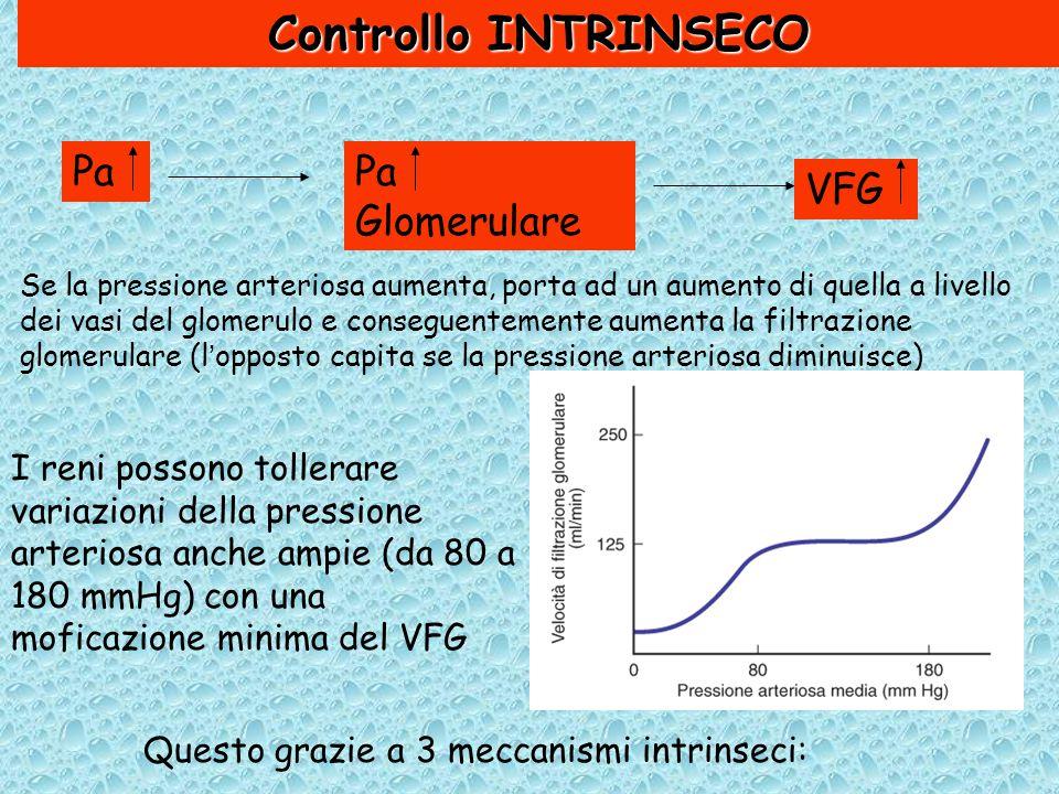 Controllo INTRINSECO Pa Pa Glomerulare VFG
