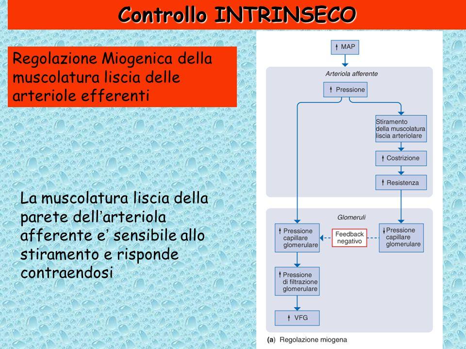 Controllo INTRINSECO Regolazione Miogenica della muscolatura liscia delle arteriole efferenti.