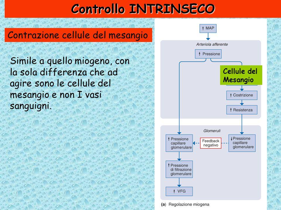 Controllo INTRINSECO Contrazione cellule del mesangio