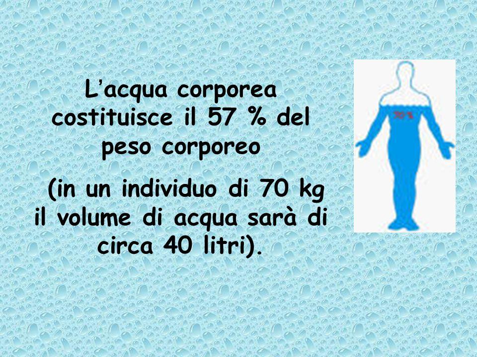 L'acqua corporea costituisce il 57 % del peso corporeo