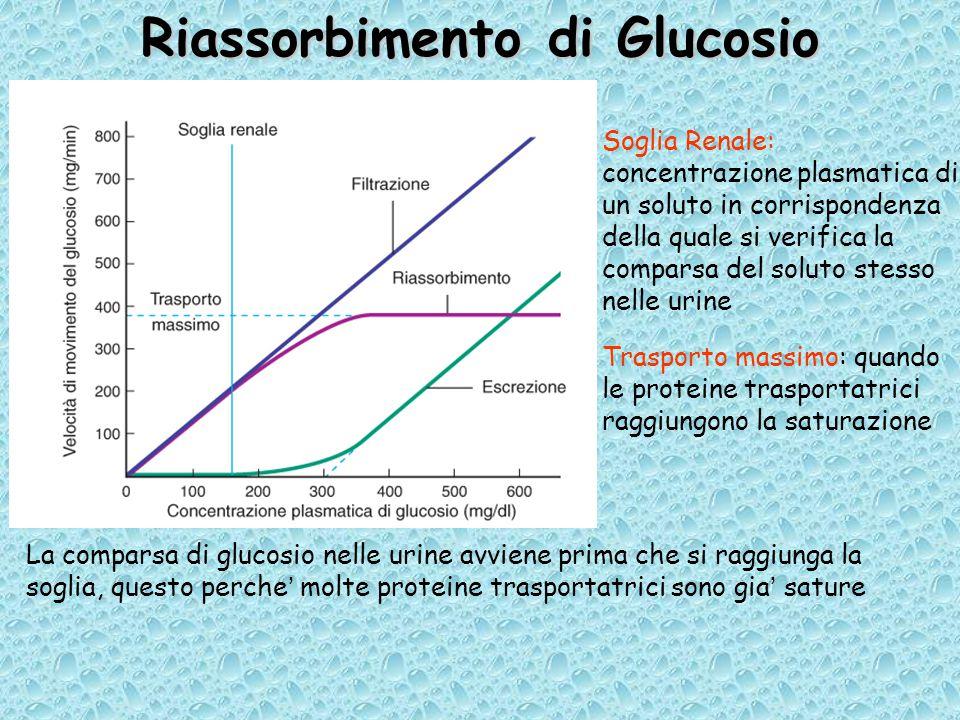 Riassorbimento di Glucosio