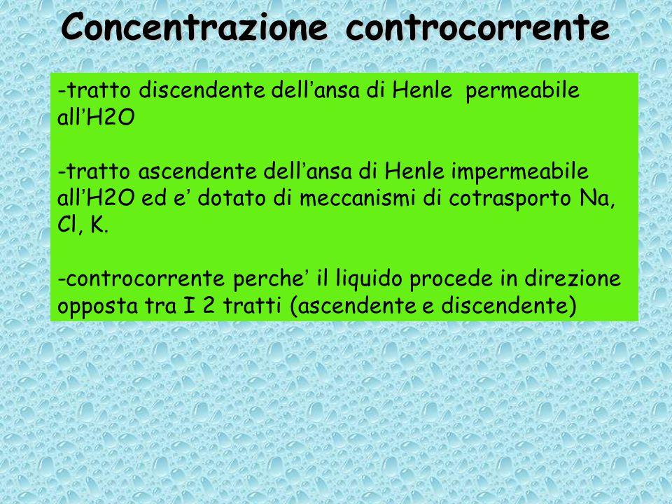 Concentrazione controcorrente