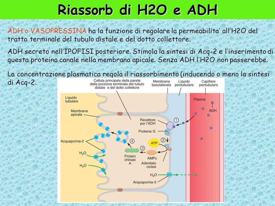 Riassorb di H2O e ADH