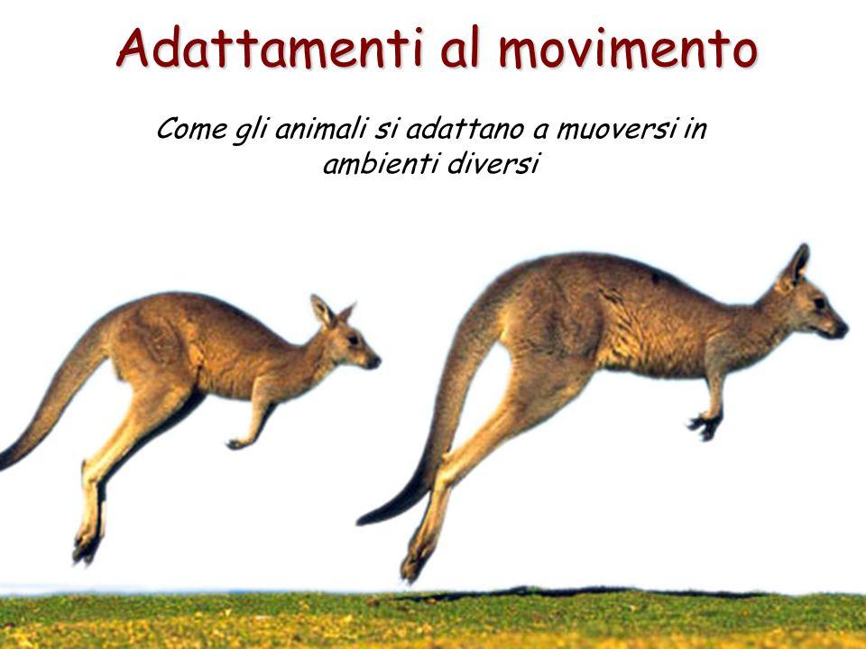 Adattamenti al movimento