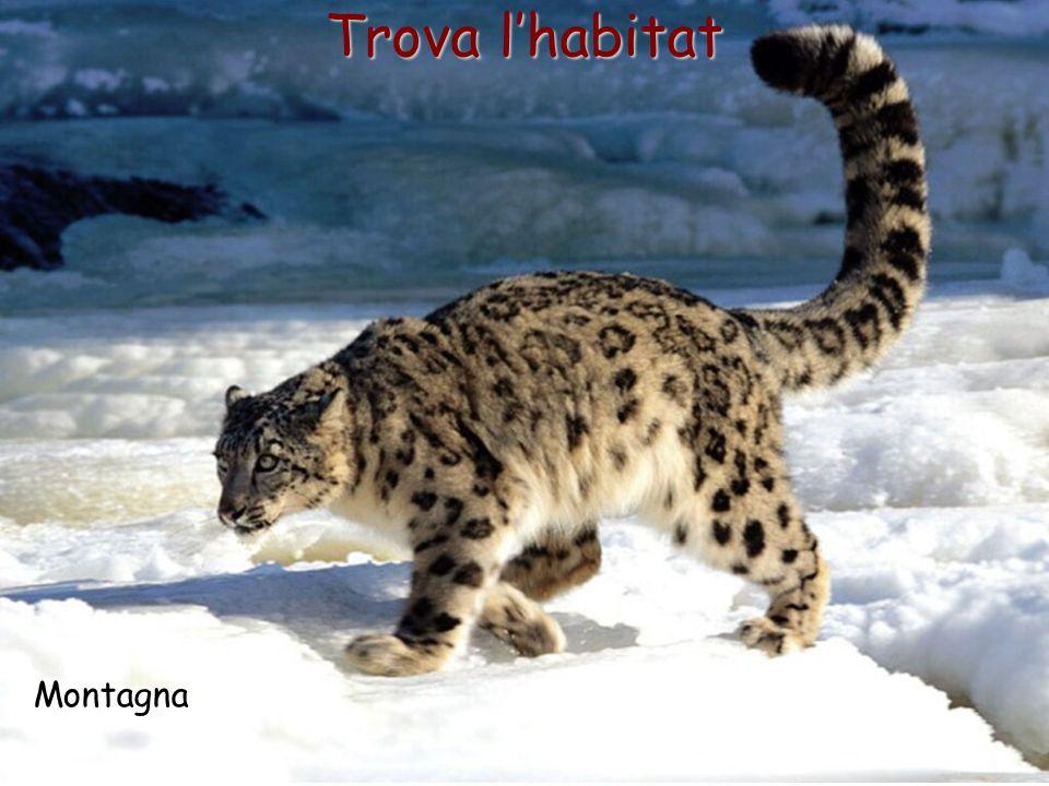 Trova l'habitat Montagna