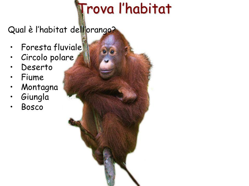 Trova l'habitat Trova l'habitat Qual è l'habitat dell'orango