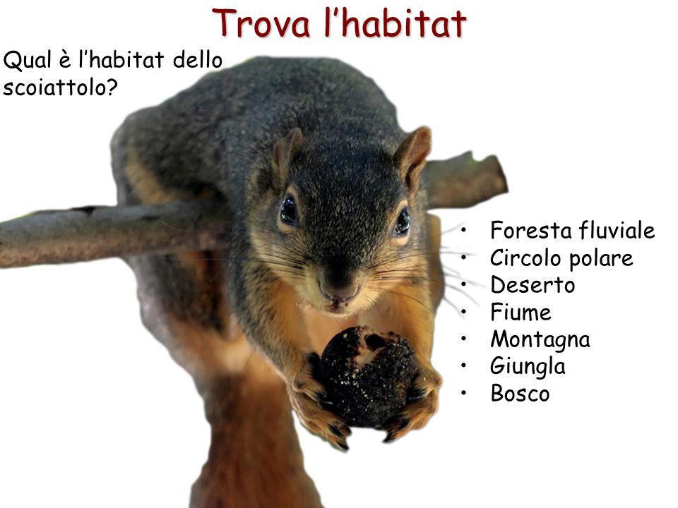 Trova l'habitat Qual è l'habitat dello scoiattolo Foresta fluviale