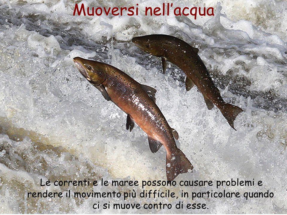 Muoversi nell'acqua