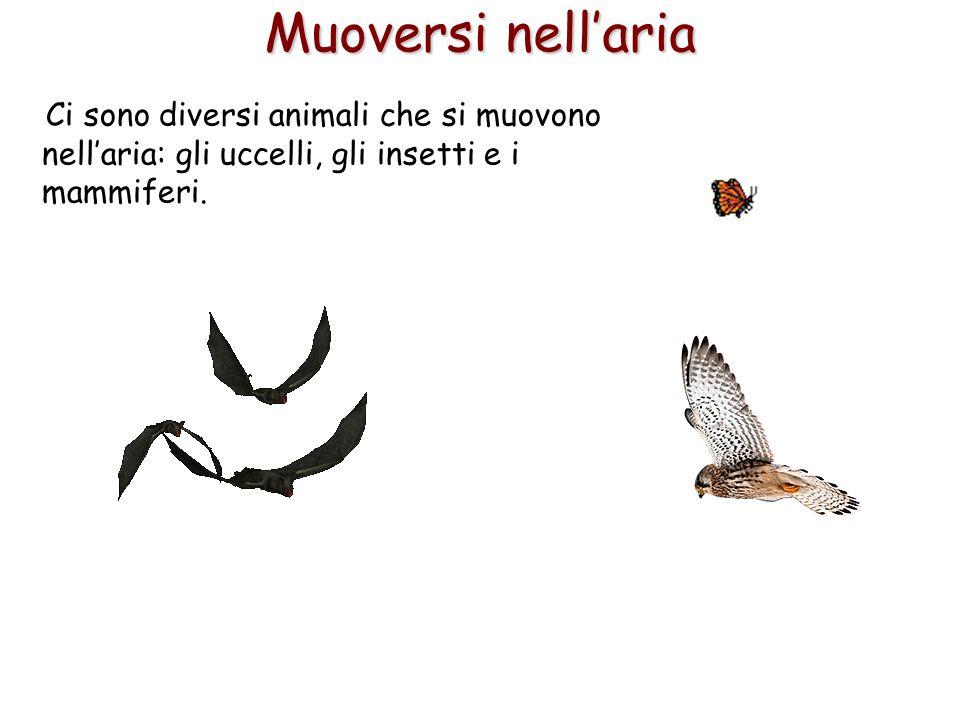 Muoversi nell'aria Ci sono diversi animali che si muovono nell'aria: gli uccelli, gli insetti e i mammiferi.