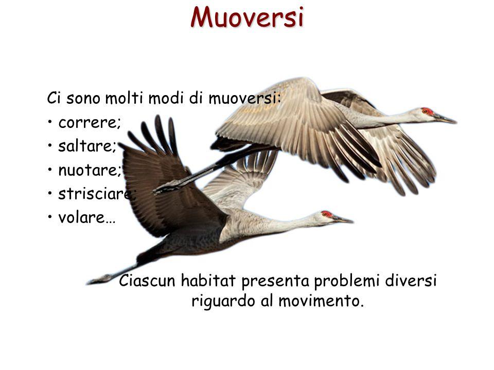 Ciascun habitat presenta problemi diversi riguardo al movimento.